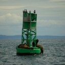 Sea lions and birds love channel markers
