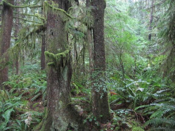 Forest walk at Von Donop
